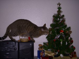 Pepper loves to try to eat this mini tree and all the ornaments on it!