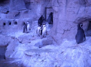 Outside of the penguin exhibit