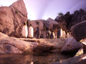 Inside the penguin exhibit