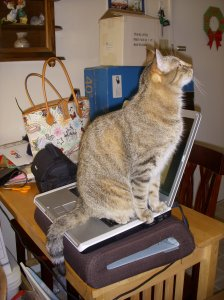Who could work with all that cat on their laptop?